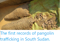 https://sciencythoughts.blogspot.com/2019/12/the-first-records-of-pangolin.html