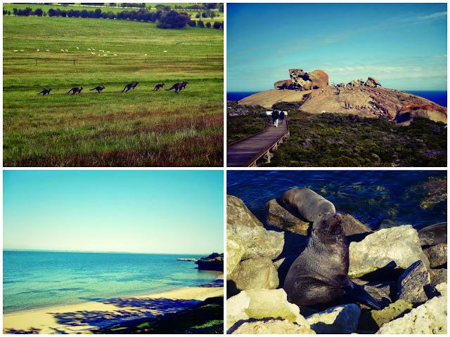is kangaroo island worth it