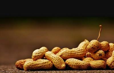 Cara Tepat Memasak Kacang Tanah