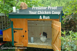 https://proverbsthirtyonewoman.blogspot.com/2014/06/predator-proof-your-chicken-coop-and-run.html