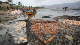 Ikan Mati di Danau Toba