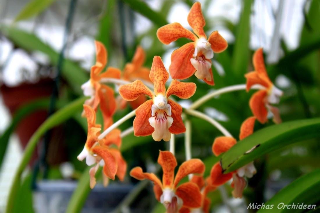 micha 39 s orchideen einblick in das gew chshaus eines. Black Bedroom Furniture Sets. Home Design Ideas