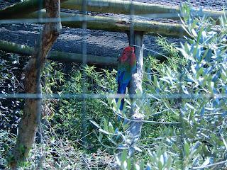 Parco Gallorose(ガッロロゼ公園)熱帯地方の鳥