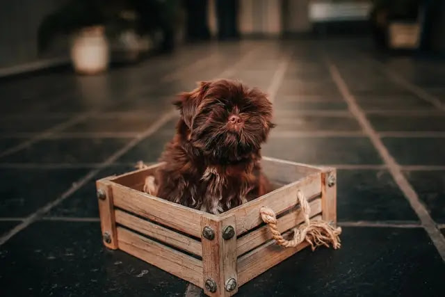 dog crate large dog crate large dog kennel small dog crate xl dog crate medium dog crate extra large dog crate ruff land kennels vari kennel large dog cage