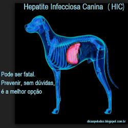 Hepatite infecciosa canina: Doença que pode levar o animal a óbito em horas