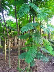 Pohon di Kiosbibit.com dijamin valid dan berkualitas