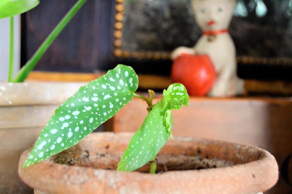 Quieres que tus plantas sobrevivan al invierno? No te preocupes que te cuento todas las claves de cómo cuidar tus plantas en invierno