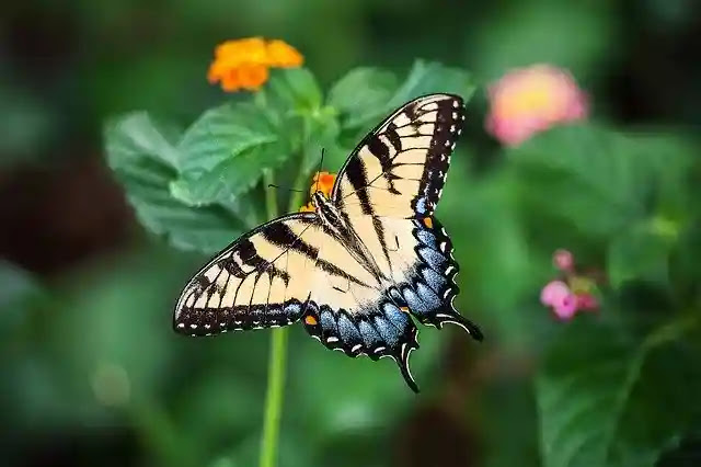 70 Information & Facts About Butterfly in Hindi