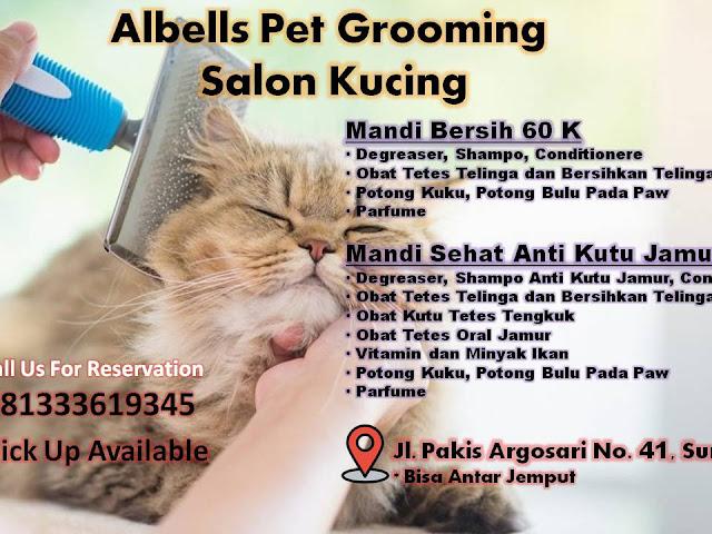 Salon Memandikan Kucing Surabaya