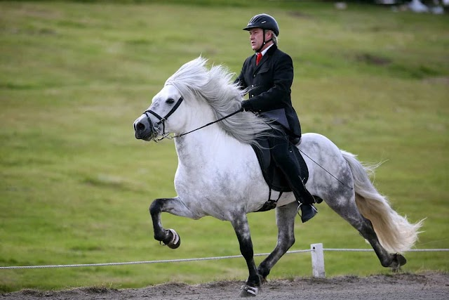 The 7 Best Horses for Dressage
