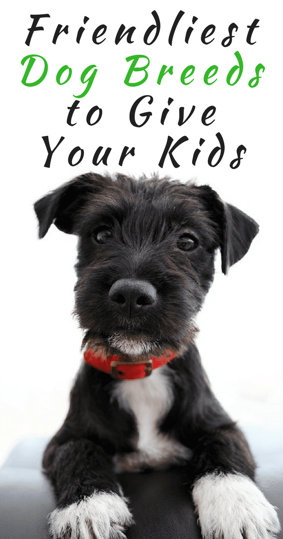 The Friendliest Dog Breeds To Give Your Kids