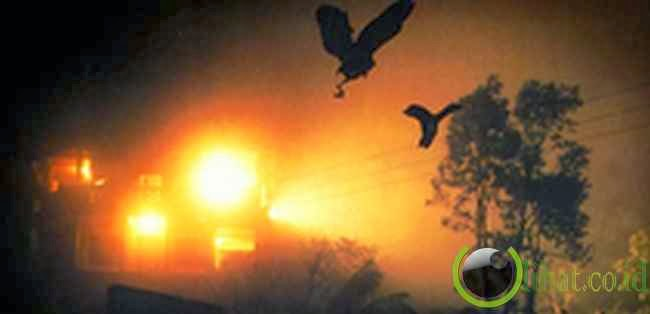 Fenomena Burung Bunuh Diri