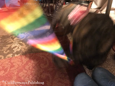 Blurry tortie: Real Cat Paisley and rainbow ribbon_Feb 2018