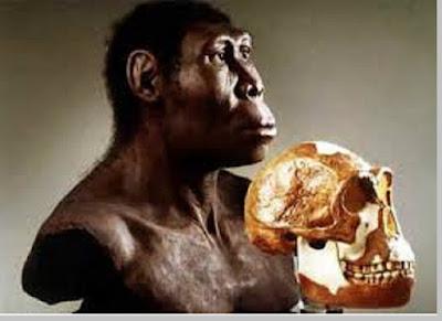 Sinanthropus Pekinensis - pustakapengetahuan.com