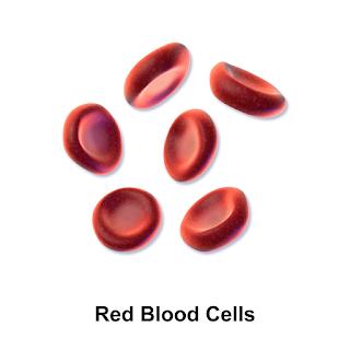 खून की कमी को दूर करने के असरदार उपाय | Effective Measures To Overcome Anemia