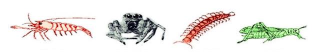 Jenis-jenis invertebrata