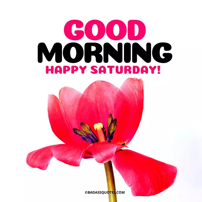 25 Beautiful Good Morning Images For Saturday Happy Saturday