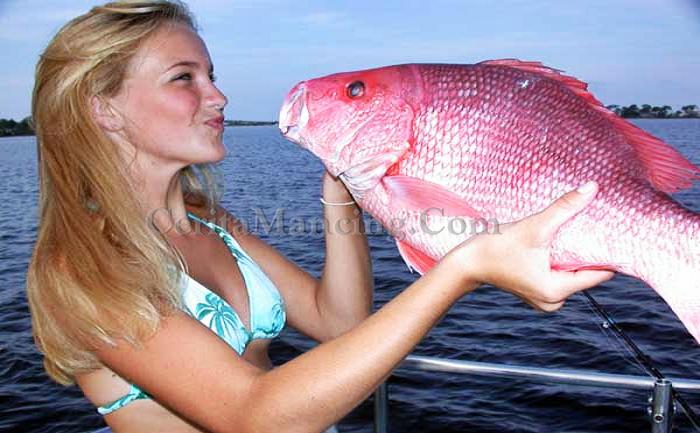Mancing Ikan Kakap Merah Besar Mantap
