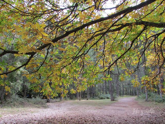 Riópar y río Mundo colores de otoño