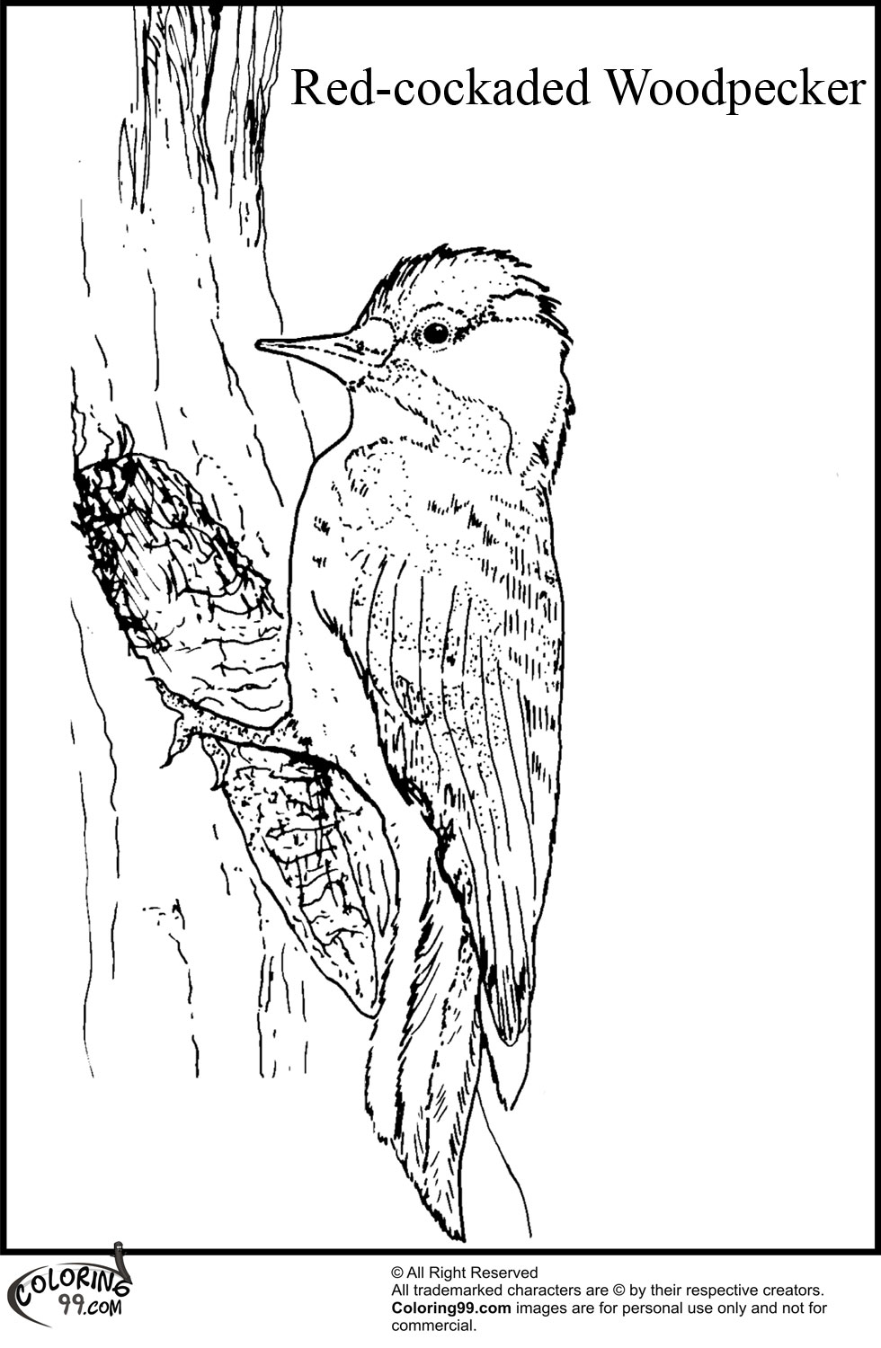 Woodpecker Coloring Pages | Team colors