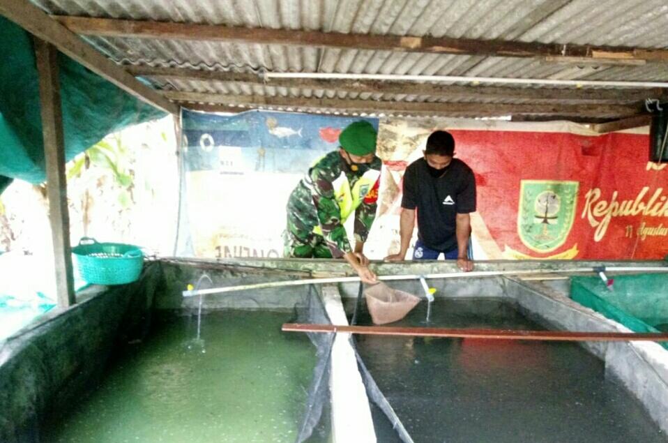 Babinsa Desa Sepempang Lakukan Komsos Bersama Warga Penggiat Budidaya Ikan Lele dan Cacing Sutra