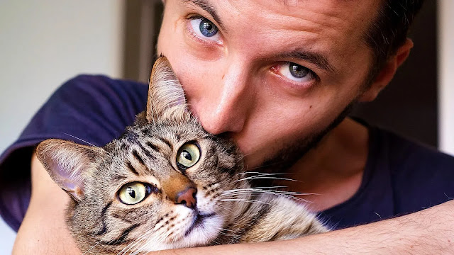 10 information you may know for the first time about cats