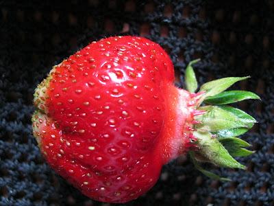 клубника методы выращивания