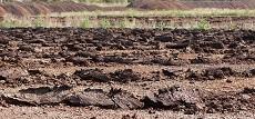 Kadar air tanah merupakan persentase volume air terhadap volume tanah atau persen berat. Biasanya, kadar air tanah dinyatakan dalam satuan cm3/100 cm3 (air per tanah) atau g air/100 g tanah. Tanah gambut memiliki berat volume 0,27 g/cm3 sedangkan tanah mineral memiliki berat volume 1,21 g/cm3. Pengukuran ph tanah dilakukan dengan metode penggunaan alat pH meter. Dari masing-masing sampel yaang telah dilakukan pengukuran didapatkan hasil pH tanah gambut lebih kecil daripada pH tanah mineral dimana nilainya berturut-turut adalah 4,12 dan 5,01.
