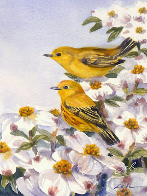 Two yellow warblers in a blossoming dogwood tree