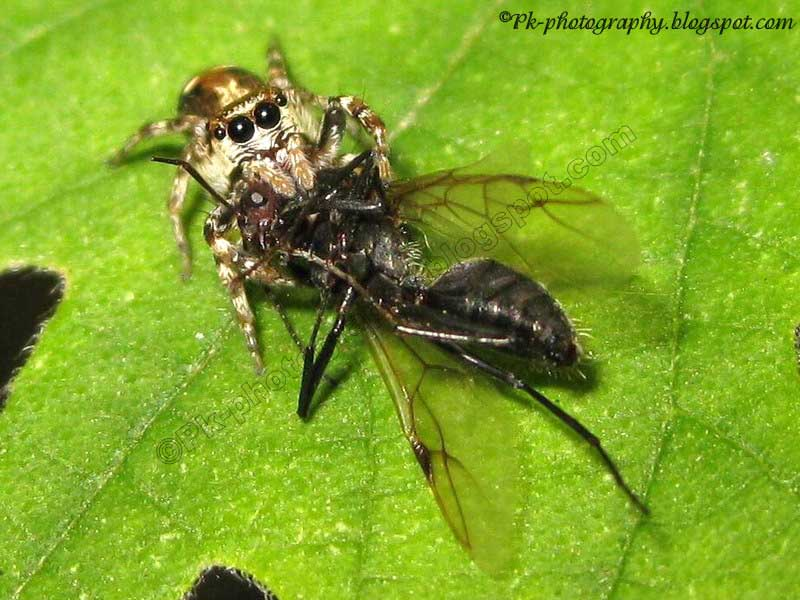 What Foods Do Wasps Eat
