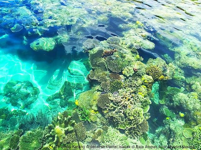 a snorkeling spot in Waigeo of Raja Ampat
