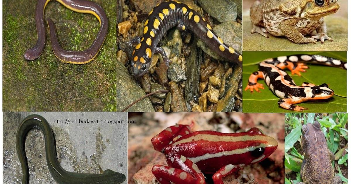 660 Koleksi Gambar Hewan Amfibi Beserta Namanya Terbaru