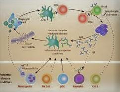Immunology Introduction of Immunology Innate and Adaptive Immunity