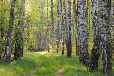 lasy w Skrwilnie