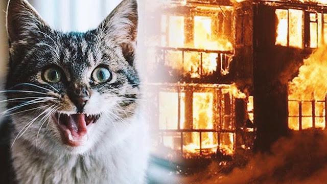 Кошка спасла дедушку от смерти в огне, но сама выбраться не смогла