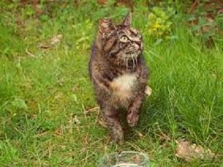 cara mengatasi kucing yang sering buang air