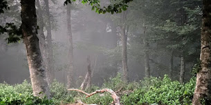 Çataldağ Ormanları Kamp Alanı – Balıkesir
