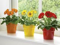 Jenis Tanaman Hias yang Cocok Untuk Memperindah Interior Rumah