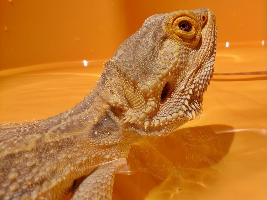 anti lizard treatment