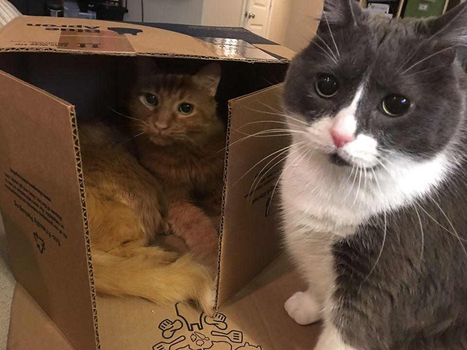 kucing bermain