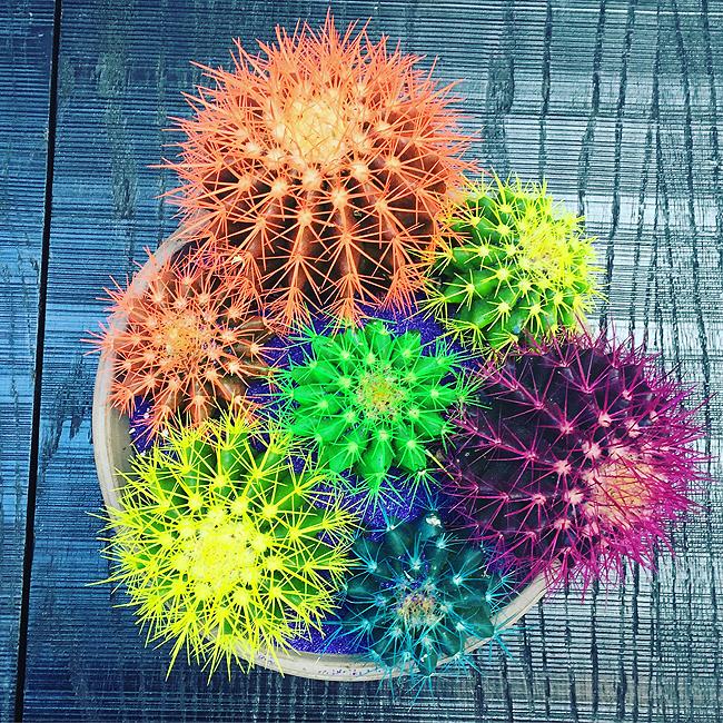 neon, cactus, The Conservatorium Amsterdam