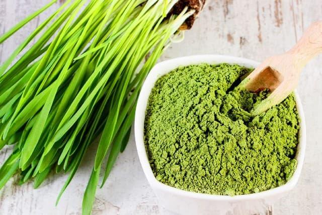 Wheatgrass là gì ? Lợi ích và tác dụng phụ