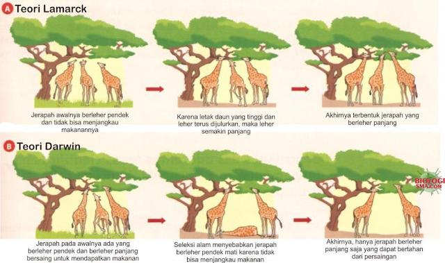 Gambar   Perbandingan Teori Lamarck dan Darwin