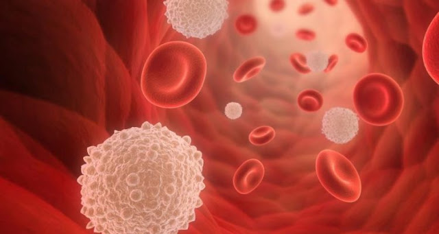 Researchers identify the protein that controls the self-renewal of blood stem cells