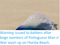 http://sciencythoughts.blogspot.co.uk/2018/02/warning-issued-to-bathers-after-large.html