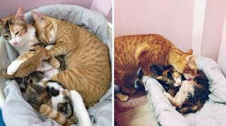 Кот-отец