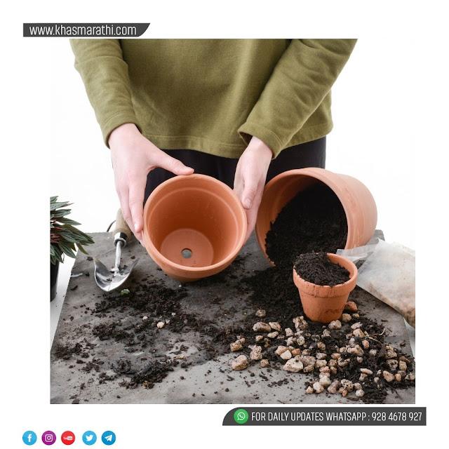 ( Indoor Plant ) घराची सुंदरता वाढवण्याऱ्या वनस्पतींची देखभाल ।। शेती ।। खासमराठी