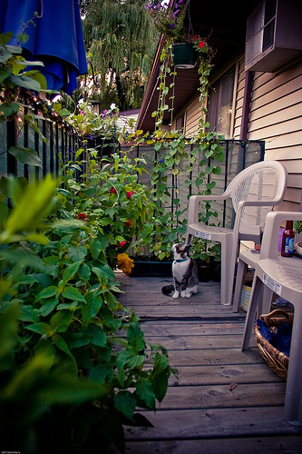 Allison Wonderland Balcony Garden