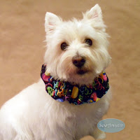 Happy Yappy Birthday Dog Scrunchie Ruffle