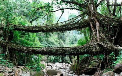 Jembatan Cherrapunji